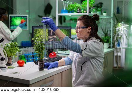 Biochemist Scientist Doctor Measuring Green Sapling Using Ruler Analyzing Genetically Modified Plant