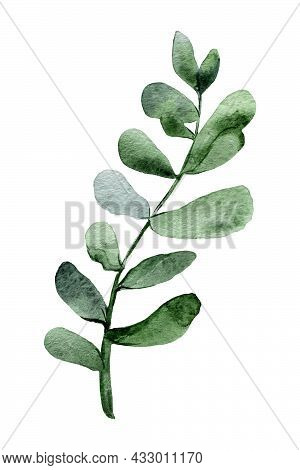 Watercolor Illustration Of A Eucalyptus Twig. Clipart Of A Green Twig With Leaves. Illustration Of E