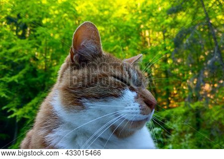 Close-up Of A Domestic Cat With Eyes Closed