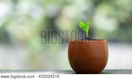 A Small Green Sapling In An Orange Pot Sits On A Table With Beautiful Bokeh Background.
