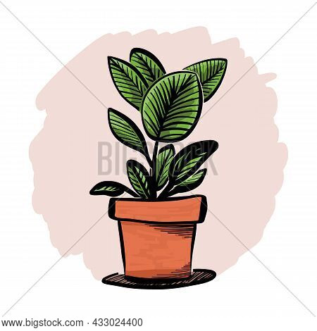 Artistic, Markers Sketch Of The Ficus Tree Or Aspidistra Houseplant, Potted Rubber Fig Plant Circle