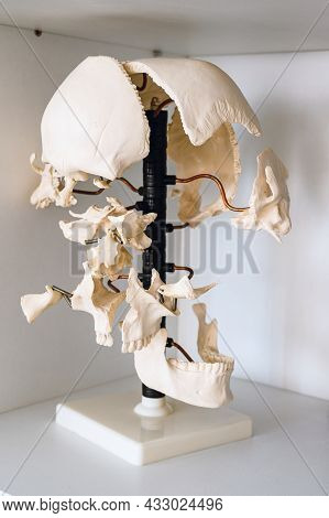 Dismountable Anatomical Model Of A Human Skull In A School Classroom Close-up