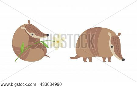 Cute Armadillo Character With Armor Shell Holding Flower And Standing Vector Set
