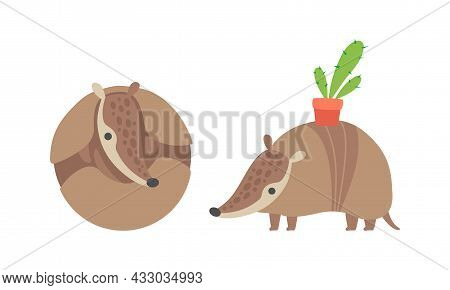Cute Armadillo Character With Armor Shell Curled Up And Carrying Cactus In Pot On His Back Vector Se