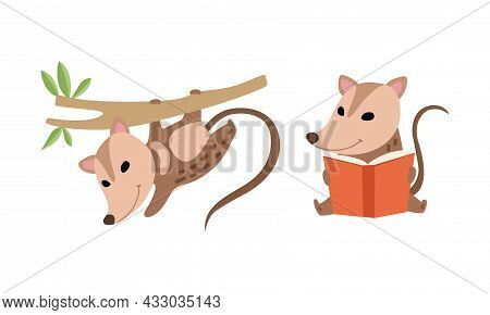 Cute Opossum Animal Reading Book And Hanging On Tree Vector Set