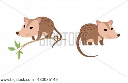 Cute Opossum Animal Sitting On Tree Branch And Standing Vector Set