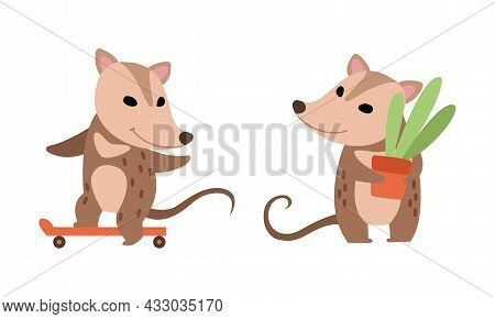 Cute Opossum Animal Holding Plant In Flowerpot And Skateboarding Vector Set