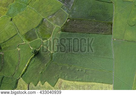 Aerial View Of Green Paddy Rice Fields In The Countryside Of Thailand