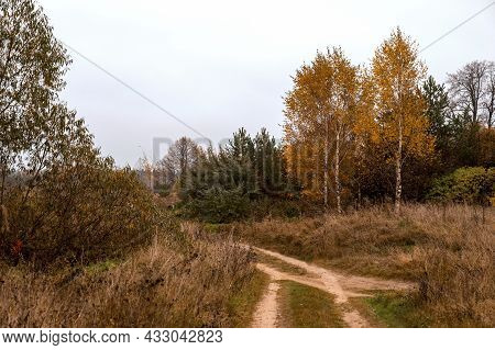 Rural Road, Field With Dry Plants And Birch Trees With Yellow Leaves. Country Autumn Landscape. Colo