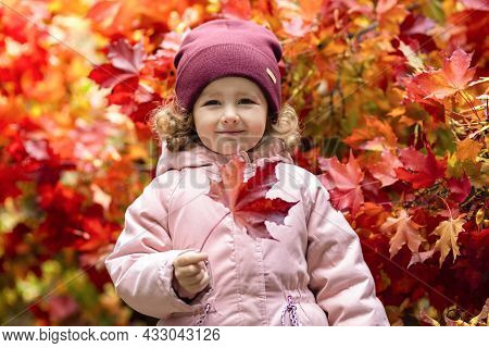 Little Cute Girl Playing With Red Maple Leaf In Autumn Day. Happy Child Play With Fallen Golden Leav