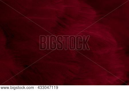 Macro Photo Of Red Hen Feathers. Background Or Textura
