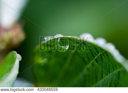 Macro Rain Drop On Green Leaf With Sun Shining In Morning. Drops Of Dew With Transparent Water On A
