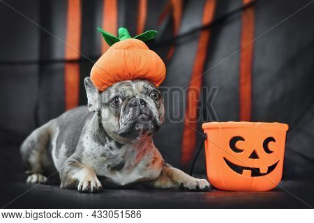 French Bulldog Dog Wearing Halloween Pumpkin Costume Hat In Front Of Black And Orange Paper Streamer
