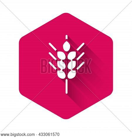 White Cereals Set With Rice, Wheat, Corn, Oats, Rye, Barley Icon Isolated With Long Shadow Backgroun