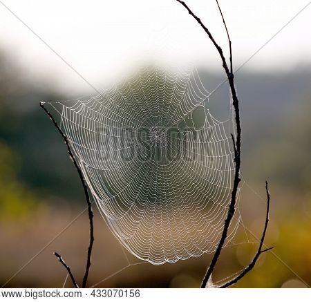 Spider web in autumn morning steppe