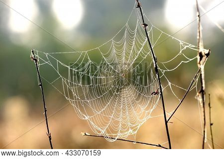 Nice spider web in morning steppe