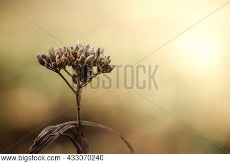 Dry Trendy Plants In The Sun. Beautiful Autumn Background. Dried Flowers Close-up. Poster For Interi