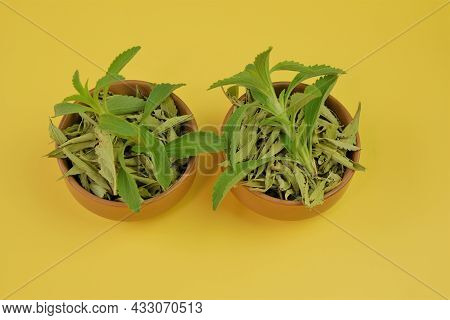 Stevia Rebaudiana.natural Sugar Substitute. Dry And Fresh Stevia In Cups On Yellow Background.