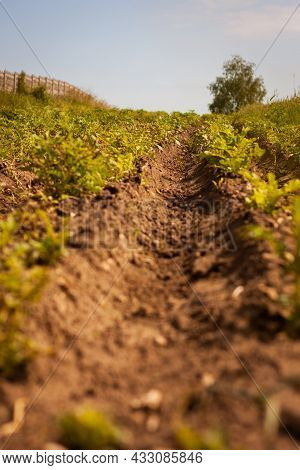 Ground Level Photo Of Ploughing Furrow In The Field | Worm's Eye View On Tilled Field With Furrows S