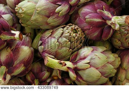 Green And Purple Fresh Globe Artichokes On Retail Market Display, Low Angle View