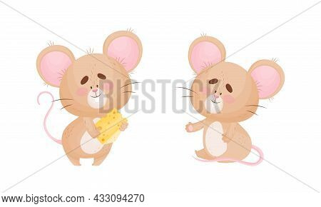 Cute Mouse Character As Small Rodent Eating Cheese Slab And Sitting Vector Set