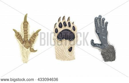Animal Limb With Primate Hairy Paw And Dog Foot Vector Set