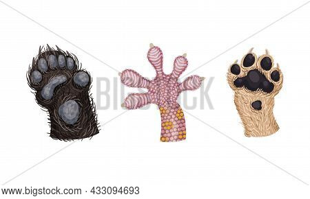 Animal Limb With Lizard Claw And Dog Paw Or Foot Vector Set