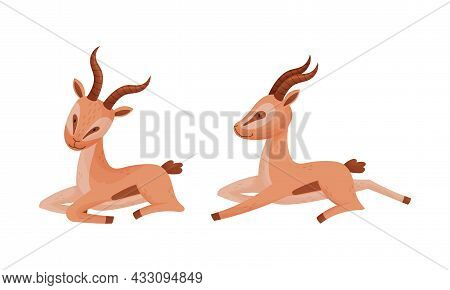 Sitting African Gazelle As Fawn-colored Antelope Species With Curved Horn Vector Set