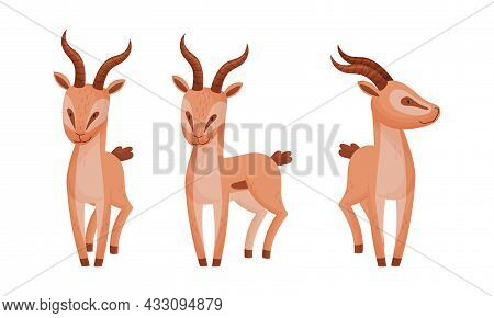 Standing African Gazelle As Fawn-colored Antelope Species With Curved Horn Vector Set
