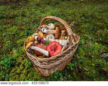 Wooden Basket On The Ground Full With Edible Mushrooms - Russula Rosea, Chanterelles, Boletus, Bolet