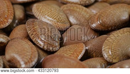 Fresh raw seafood clam on plate