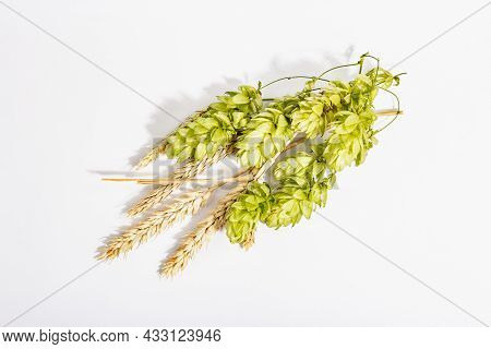 Cones Of Hops And Wheat Ears Isolated On White Background