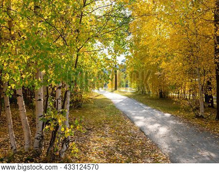 Bright Golden Autumn. The Footpath In The Park Passes Through Yellow And Green Trees.