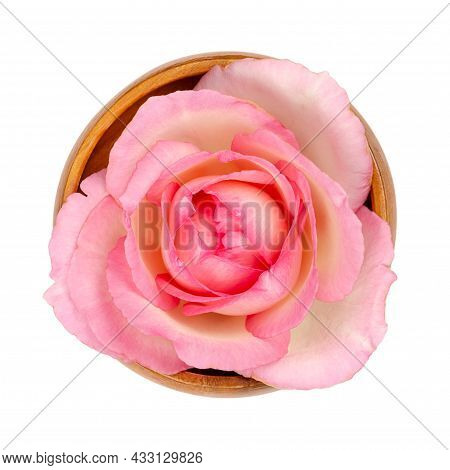 Rose Blossom, In A Wooden Bowl. Fresh Light Pink Colored Flower Head Of A Garden Rose, Also Known As
