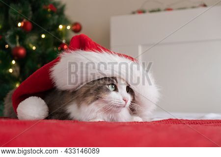 A Cute Cat In A Santa Claus Hat Sits On A Red Blanket Near A Christmas Tree With A Garland. Christma
