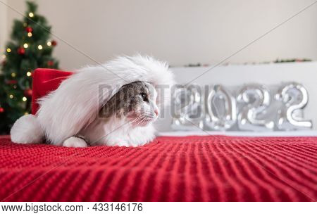 A Cute Cat In A Santa Claus Hat Sits On A Red Blanket Near A Christmas Tree With A Garland And Balls