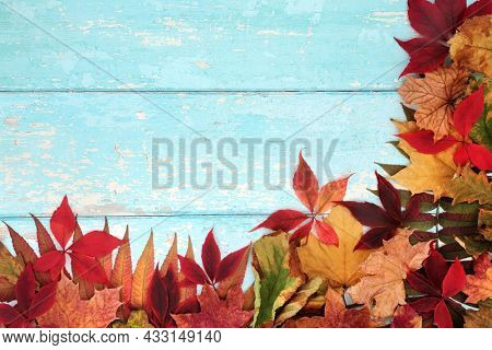 Autumn Happy Thanksgiving background border frame with  maple, sycamore and horse chestnut leaves. Nature composition for the Fall season. On rustic blue wood, top view, copy space.