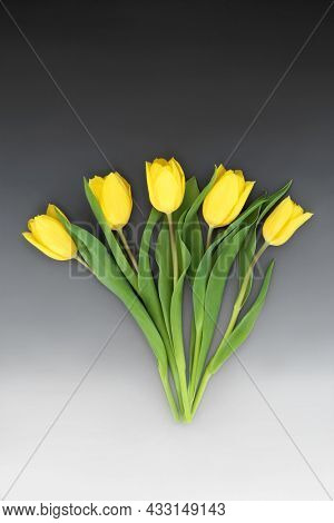 Yellow tulip flower abstract still life arrangement for Spring, Easter and Mothers Day on gradient grey background. Creative layout nature arrangement.
