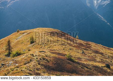 Bright Autumn Landscape With Coniferous Trees On Sunlit Orange Hill On Background Of Mountains Silho