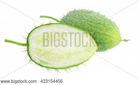 Ecballium Isolated On White Background. Ecballium Elaterium Or Wild Cucumber Pods.