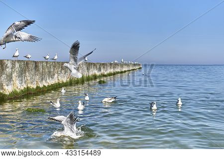 Seagulls Flying, Swimming, Standing On Wooden Breakwaters On The Baltic Beach. Beautiful Seascape.