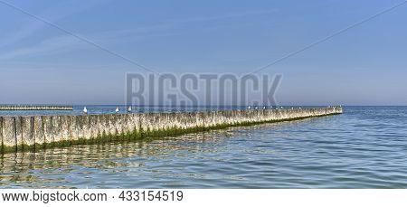 Seagulls On Wooden Breakwaters On Baltic Beach. Beautiful Seascape. Banner