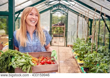 Portrait Of Woman Holding Box Of Home Grown Vegetables In Greenhouse