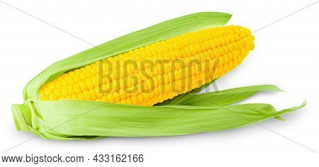 Ear Of Corn Isolated On White Background.