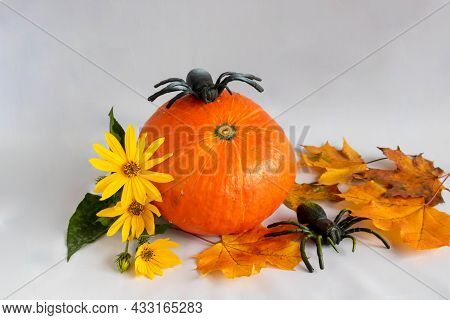 An Orange Pumpkin, Maple Leaves,yellow Flowers And Two Spiders. The Concept Of Halloween. Place For