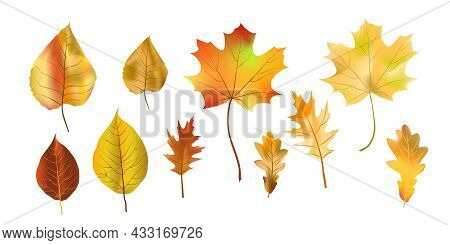 Set Bright Colorful Autumn Leaf Isolated On White Background. Graphic Design Autumn Symbol. Red Oran
