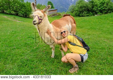 Backpacker Woman Taking A Llama Alpaca For A Ride On Top Of Comino Mount In Switzerland. Centovalli