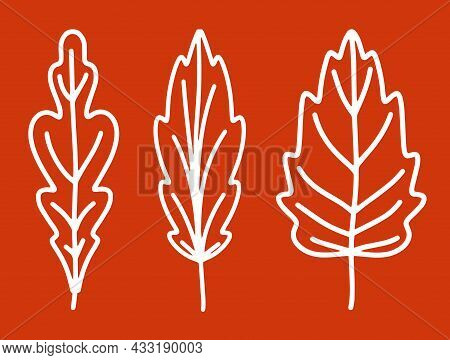 A Collection Of Fallen Autumn Leaves Of Different Shapes. Autumn Background, A Poster With Different