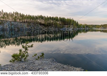 The Group Of Small Pines Are By A Lake With Blue Water In A Park In The Summer Day.