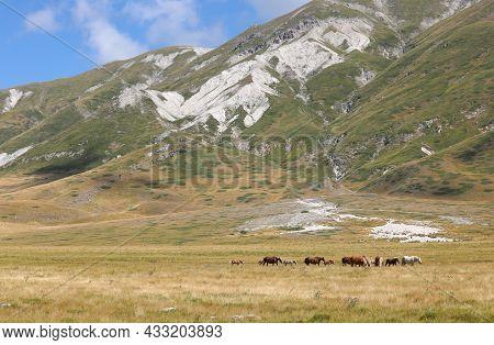Horses In The Wild Grazing Undisturbed In The Boundless Prairie In Summer